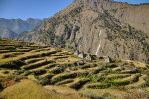 Trek de Tamang-Héritage + Langtang en 13 jours
